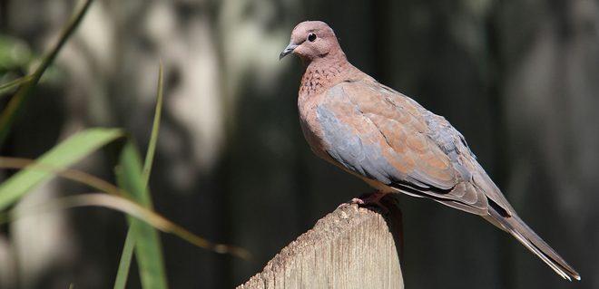 الطيور
