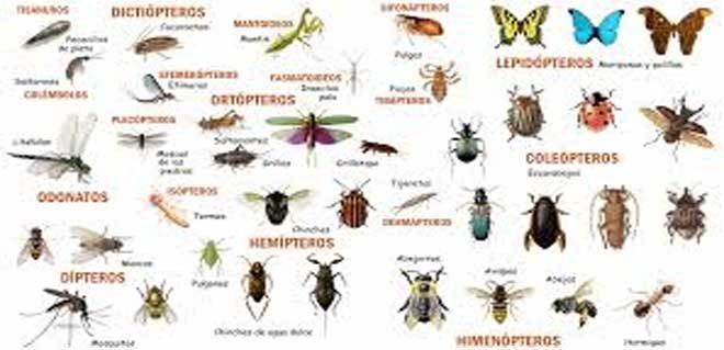 حكم-بيع-الحشرات
