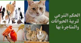 بيع الحيوانات